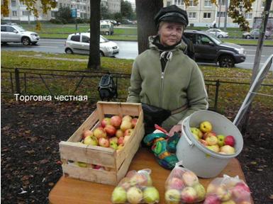 Фото 7.  Купите яблочки.